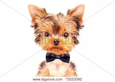 dog wearing a neck bow