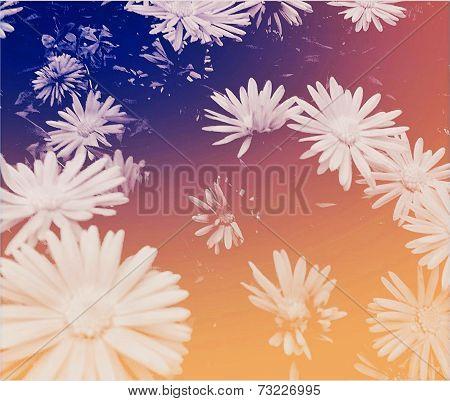 Fleeting-flowers
