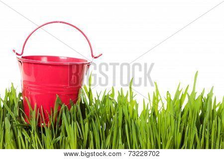The bucket