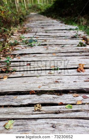 Wooden Walkway Leads Into A Wood