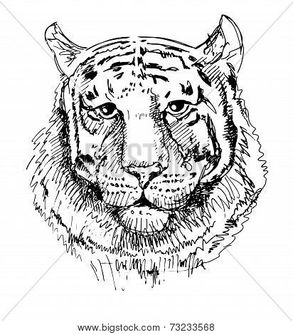 Artwork tiger, sketch black and white drawing