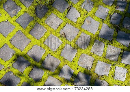 Brick Road With Moss
