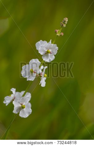white flowers against a green background