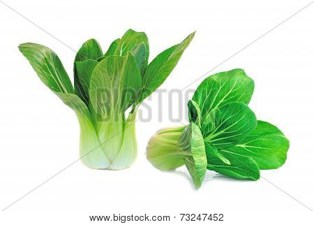 Organic Bok Choy On White Background