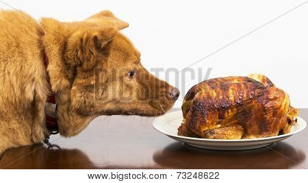 Dog About To Eat Chicken