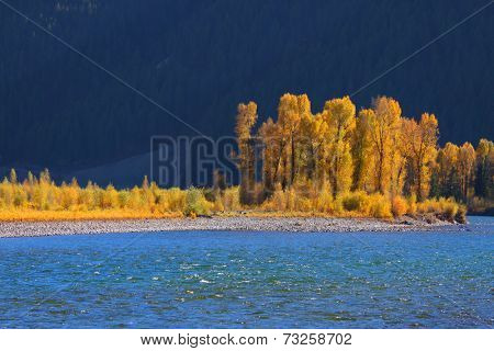Cottonwood trees by snake river near Palisades reservoir