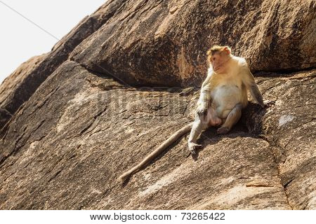 Monkey In The Mountain