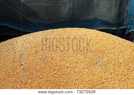 Pile Of Raw Kernel Corn Beans
