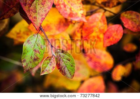 Fall Season Nature Background. Bright Colorful Autumn Leaves