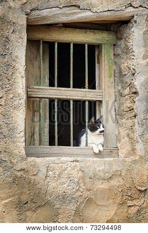 Oman Cat