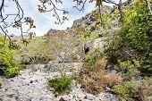 picture of jabal  - Image of riverbed Wadi Bani Habib in Oman - JPG