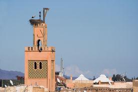 picture of mosk  - Stork on a mosk in Marrakech Morocco - JPG