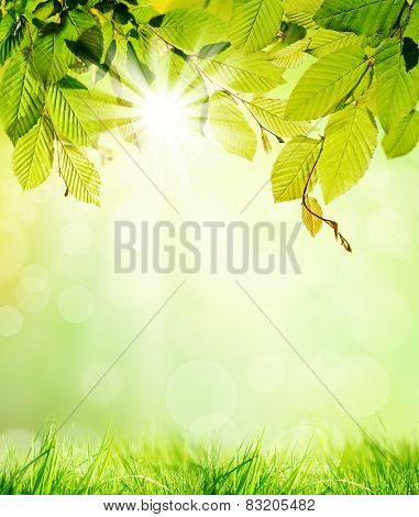 Green hornbeam leaves with blur background