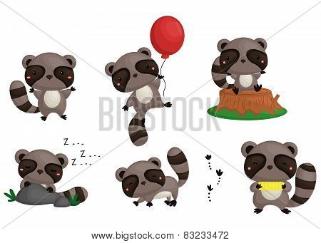 Raccoon Vector Set