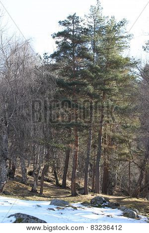 Trees Growing On The Hillside