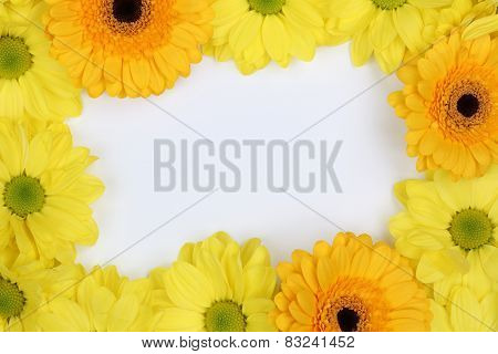 Frame From Chrysanthemums Flowers In Spring Or Mothers Day With Copyspace