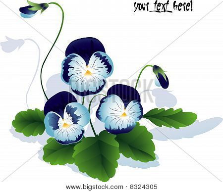 bouquet of summer flower. Pansy with leaves and bud.