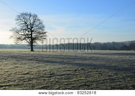 Winter Morning in the English Countryside.
