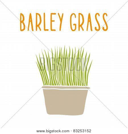 Barley grass.