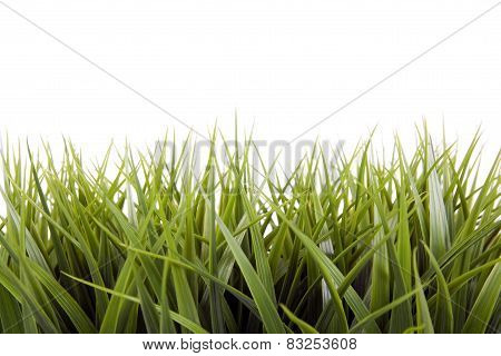 A Green grass over a white background