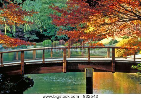 Classic Japanese Garden Tokyo,Japan