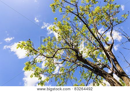 Green branches against blue sky