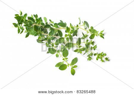Twigs of oregano on a white background