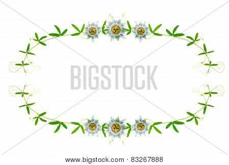Frame Of Green Branches With Tendrils And Passion Flower Is Isolated On White Background, Closeup