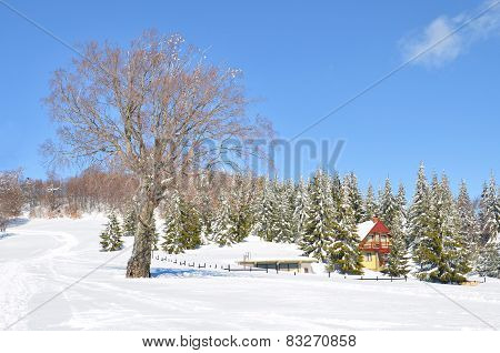 snow landscape with house among green pine trees