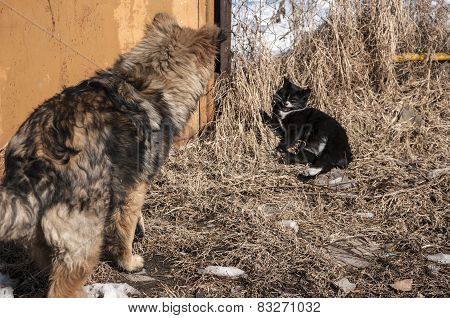 Straw dog and alley cat