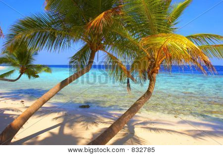 EXELENT BEACH WITH PALM TREES