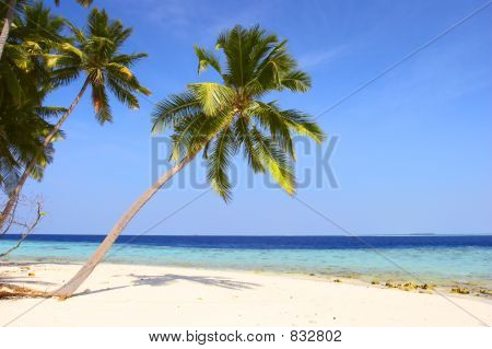 NICE BEACH WITH PALM TREES