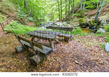 wooden timber bench in rain forest