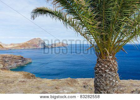 Bare Coast Of Madeira Island With Single Palm Tree