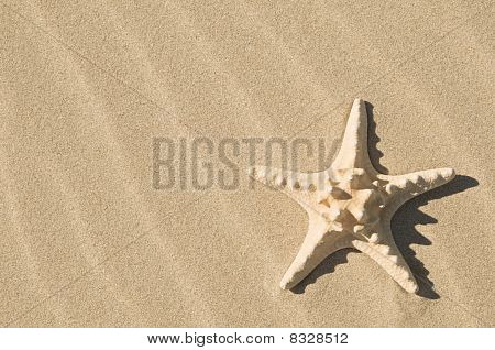 Starfish And Sand.