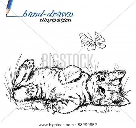 kitten sketch - hand-drawn illustration