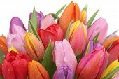 stock photo of birthday  - Tulips flowers bouquet in spring birthday or mother - JPG