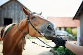 pic of reining  - Horse rider pulls the reins before training - JPG