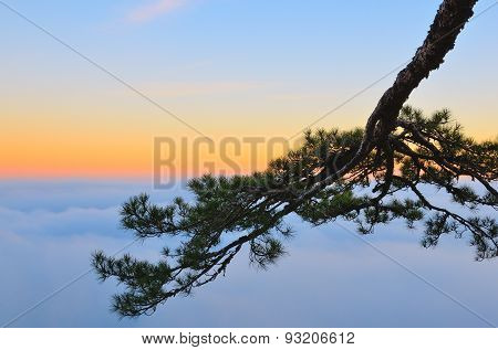 A tree branch above the clouds at sunset.