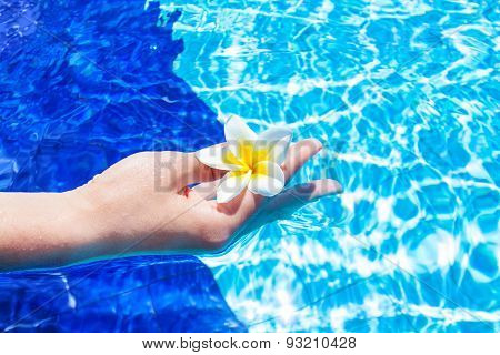 Hand Holding Flower in Blue Water