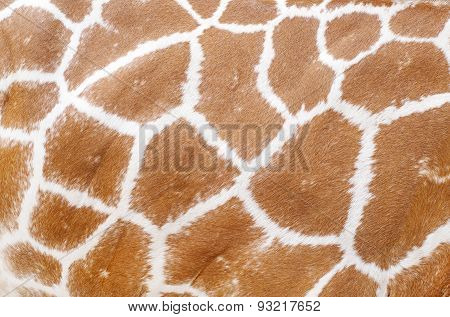 giraffe animal skin texture