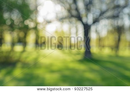 defocused bokeh background of apple garden with blossoming trees  in sunny day