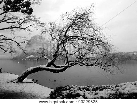 The lost winter of a tree