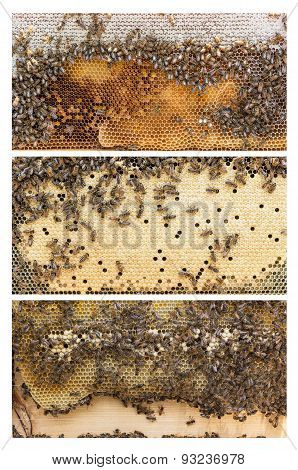 Beehive Frames Of Honey Bees