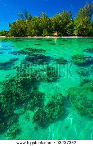 Underwater coral reef next to green tropical island on Moorea, French Polynesia