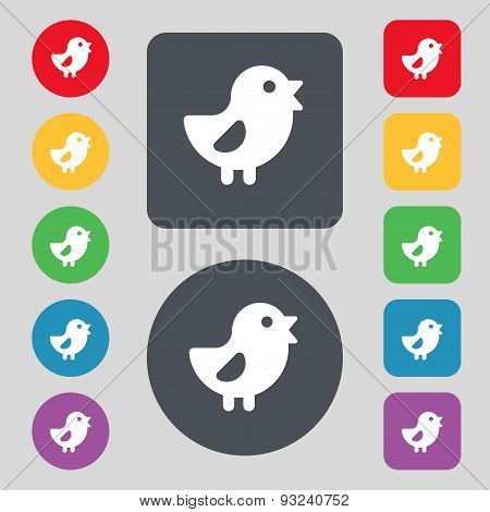 Chicken, Bird Icon Sign. A Set Of 12 Colored Buttons. Flat Design. Vector