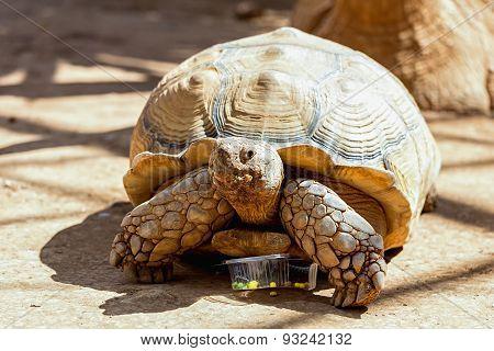 Turtle Or Tortoise On Ground
