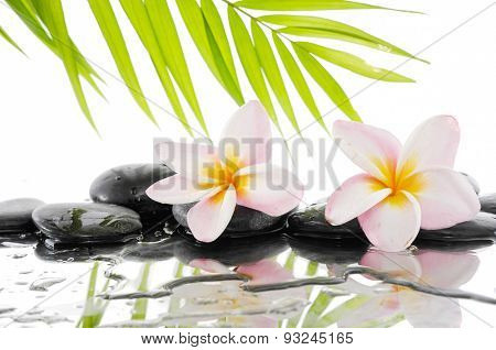 Still life with Frangipani and palm on wet zen stones