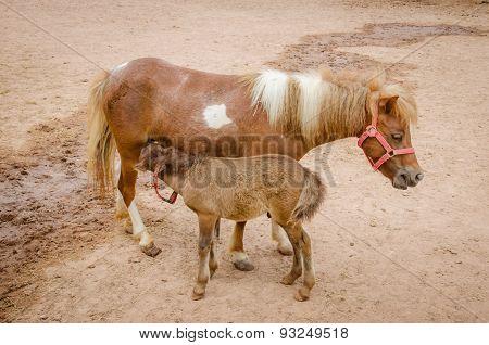Adorable Pony Portrait In Farm