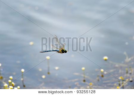 Dragonfly Close-up Flying Over Water